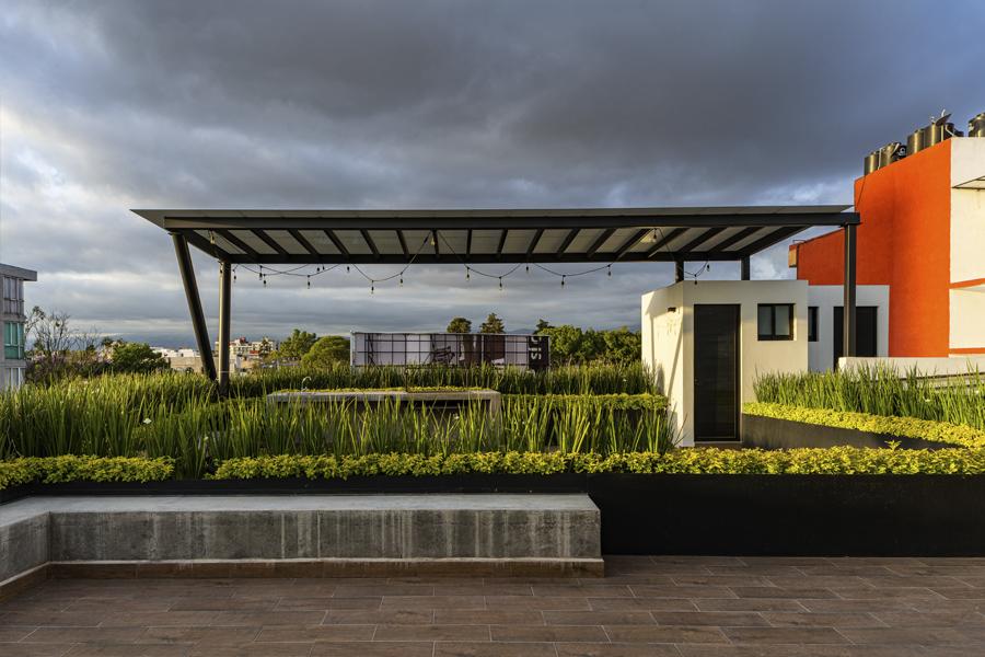 B618 roof garden con plantas verdes separando los ambientes